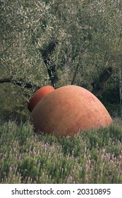 olive jar with ancient olive tree