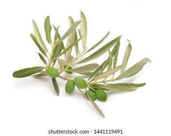 The olive, known by the botanical name Olea europaea. Isolated on white background.