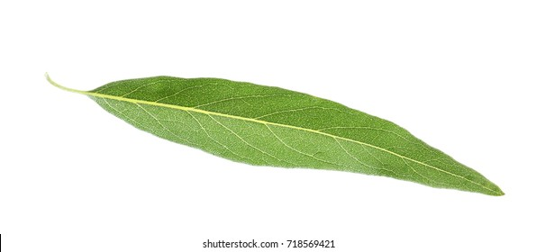 Olive leaf, isolated on white