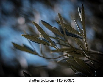 Olive leafs and bokeh