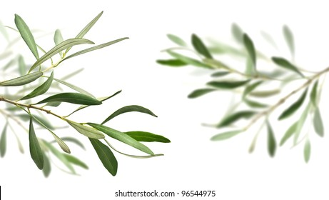 olive tree branches isolated over white, the right one is blurry