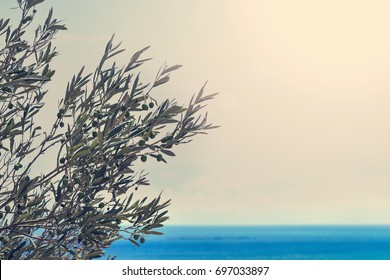 Olive tree branches with sea in the background