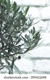 Olive tree in front of white brick wall