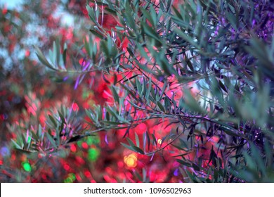 Olive tree illuminated by colorful light. Selective focus, beautiful bokeh.