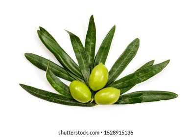 Olive tree leaves with three ripe green olives, isolated on white background, close up.
