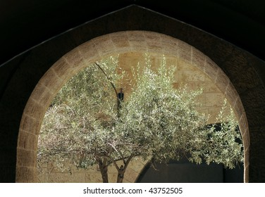 Olive Tree through Stone Arc in Old City of Jerusalem, Israel