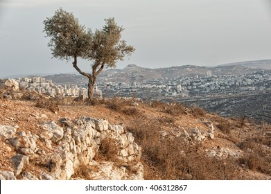 olive tree, wood, israel, palestine, beautiful scenery