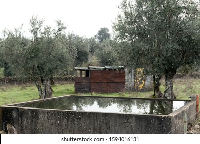 olive trees in a field and irrigation water tank