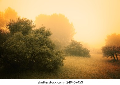 Olive Trees in a fog. Mistral wind blows in Provence (France). Aged photo.