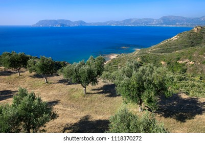 Olive trees on the coast of the island of Zakynthos in Greece. Beautiful summer landscape