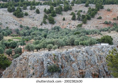 Olive trees and vegetation above the Aradena Canyon, southern island of Crete