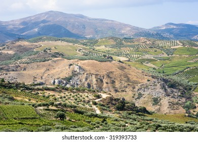 Olive trees and vines spread over the foothills of the mountains to the south of Heraklion, central Crete.