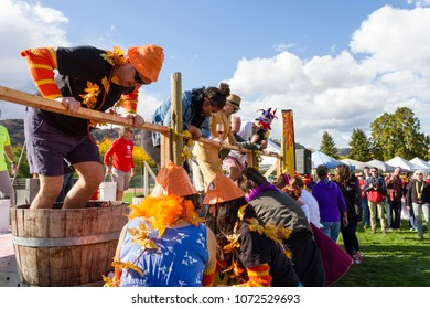 Oliver, British Columbia, Canada - October 1, 2017: Competitors in the grape stomp at the annual Festival of the Grape located in the Okanagan Valley, Oliver, British Columbia, Canada.