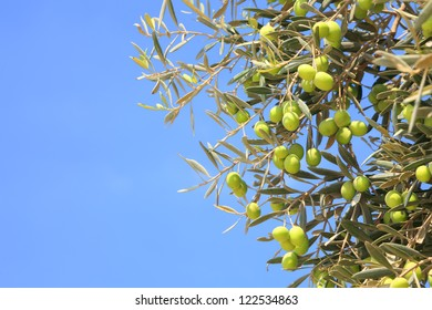 Olives branch on the blue sky background