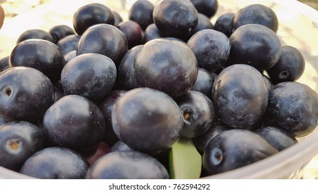 olives ripe on the grandmathers hands  for background