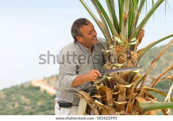 Oludeniz, Turkey, April 28, 2016: Man on the ladder cuts palm leaves in the sunlight