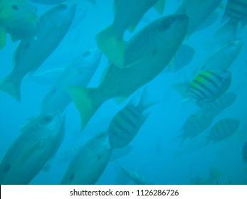 oman muscat diving