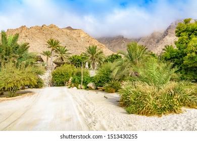 Omani Oasis at Zighy Bay in Musandam, Oman.