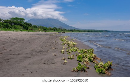 Ometepe Island, Nicaragua, Central America - May 6, 2017: View of a lonely beach of black sand and green algae on the shore with a volcano covered with nebes on the top, Omepete Island of Nicaragua
