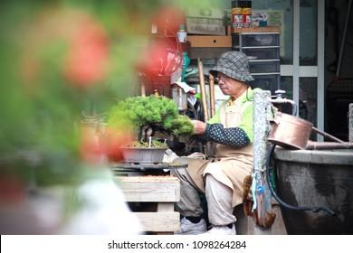 Omiya, Saitama, Japan - Oct 17, 2017 : The lifestyle of Omiya bonsai village,  Gardening pruning bonsai.