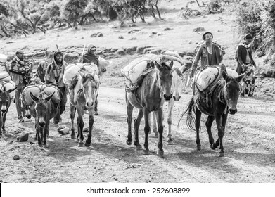 OMO, ETHIOPIA - SEPTEMBER 21, 2011: Unidentified Ethiopian men and horses. People in Ethiopia suffer of poverty due to the unstable situation