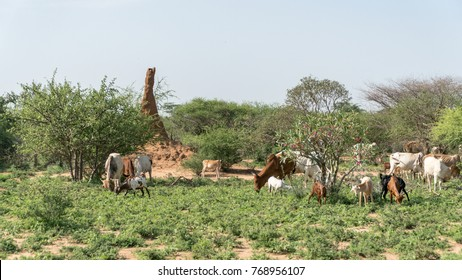 Omo Valley, South Ethiopia - September 2017: Huge termite mound in Africa