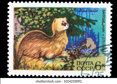 """OMSK, RUSSIA - JANUARY 31, 2018: a postage stamp printed in the USSR shows the """"Stolby Reserve"""", an animal """"Kolonok"""", circa 1975, close-up, isolated"""