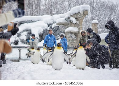 """On 15 February 2018 """"Penguin Walk"""" is an icon of winter in Asahiyama Zoo, that the most attractive events in Asahikawa, Hokkaido, Japan. People can see the lively penguins closely!"""