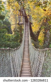 On an amazon rainforest canopy tour. See high up views of the green forest under the hot tropical sun. The suspended rope and wood bridges connect the treetops. Adventurous tourists cross.