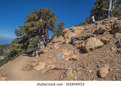 On Atalanti national trail in Troodos mountains, the largest mountain range in Cyprus, located across most of the western side of the country and approximately in the center of the island, Cyprus