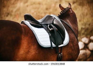 On an autumn day, a rear view of a standing bay horse with a braided mane, on the back of which a black leather saddle is worn. Equestrian sports.