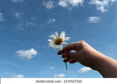 on background of blue sky and small white clouds, a hand stretched towards the sky which holds a white daisy, like a gift made in heaven, in memory of someone dear to his heart,