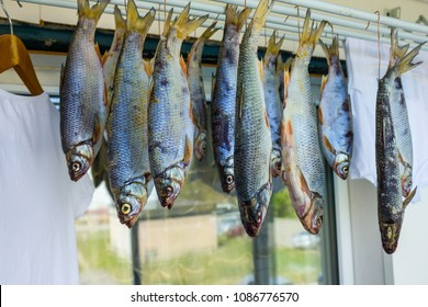 On the balcony of the house dries river fish, roach. Nearby hangs laundry washed. The window reflects the green courtyard, summer day. Lifestyle, fisherman's house.