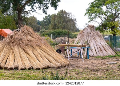 On the Baltic Sea and in Mecklenburg many houses are covered with reeds. Before, the reeds are dried and bundled.