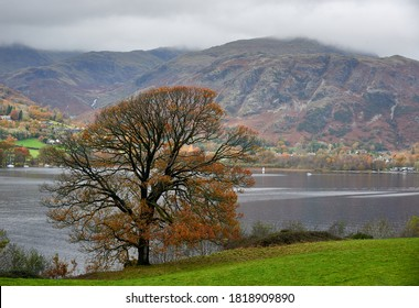 On the banks of Coniston Water, a tree and a hill in the background in fall season.