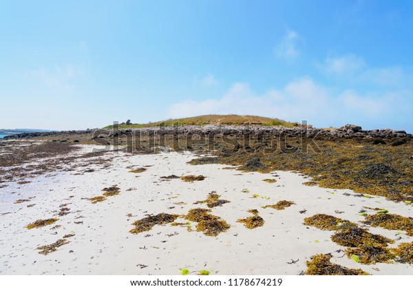 On the beach at low tide a small island is ringed with rocks. Bladderwrack seaweed forms a heavy carpet on the sand