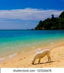 On a Beach Salty Sea Dog