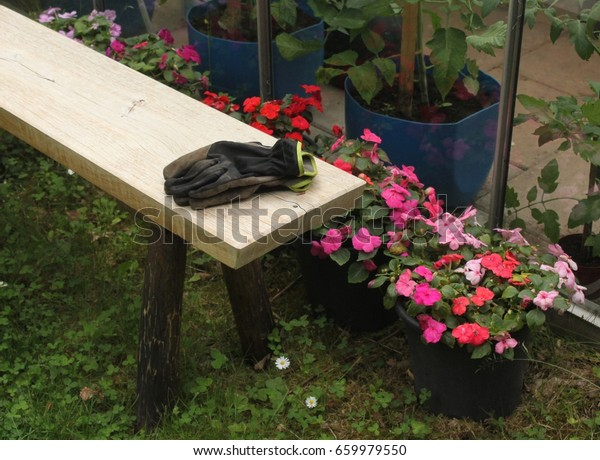 Excellent On Bench Lies Garden Gloves Greenhouse Stock Photo Edit Now Pdpeps Interior Chair Design Pdpepsorg