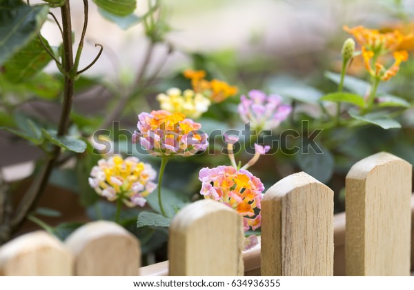 On bright sunshine and orange and red flowers on the edge of a wooden fence with wood color.