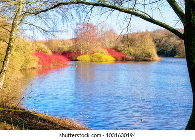 On a bright winter day from the edge of a lake, framed by two trees, small islands are full of bright coloured foliage.
