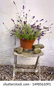 On a chair stands a pot with a lavender plant. It is an idyllic still life in the country.
