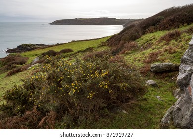 On the coast path between Gillan and porthallow in cornwall england uk