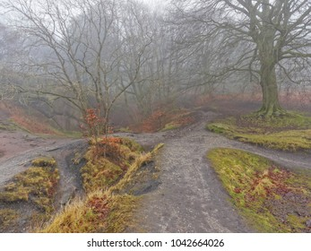 On a cold, damp foggy day four footpaths meet at a crossroads. Ahead is a forest of bare twisted trees