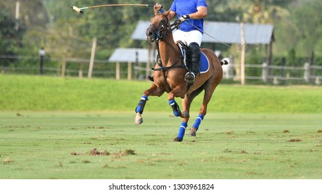 On day player and horse playing in match.