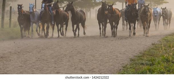 On the Early in the morning,Groom and polo horse are exercise.