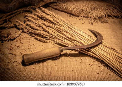On the ears of ripe wheat lies a sickle for harvesting. Burlap and jute rope. Rural scene.