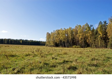 On the fringe of the autumn forest
