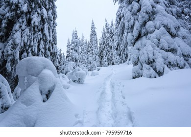 On a frosty beautiful day among mountains are magical trees covered with white fluffy snow against the idyllicl landscape. Scenery for the tourists. The wide trail leads to the majestic winter forest.