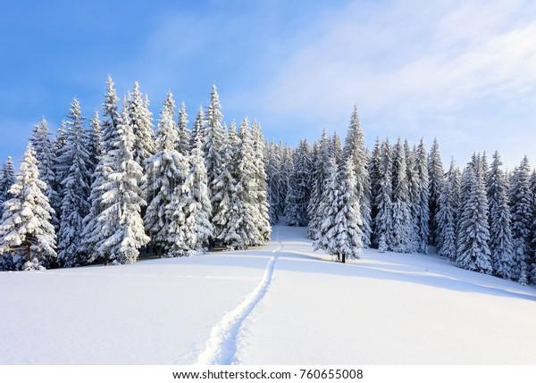 Par une belle journée gelée au milieu des hautes montagnes, des arbres magiques recouverts de neige blanche et moelleuse se dressent contre le paysage hivernal magique. Paysage pour les touristes. Le grand sentier mène à la forêt.
