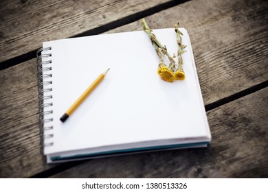 On the gray boards of the table there is a notebook for writing or drawing, a simple yellow pencil and yellow spring flowers coltsfoot
